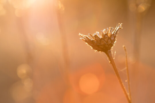 blade of grass in the rays of the setting sun orange shades, macro photo blurred background