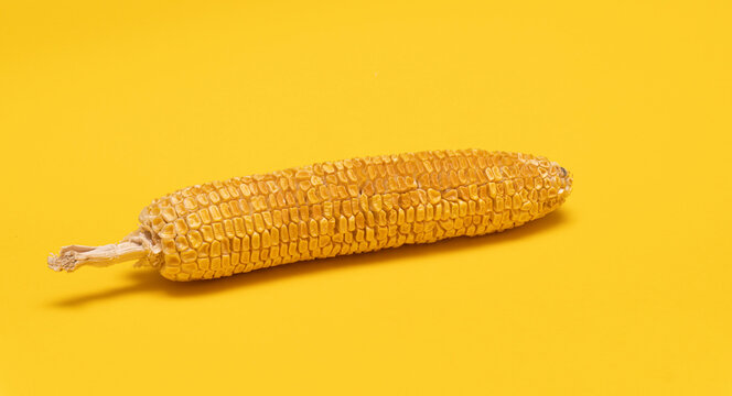 Moldy dried corn at yellow background, not eatable, copy space.