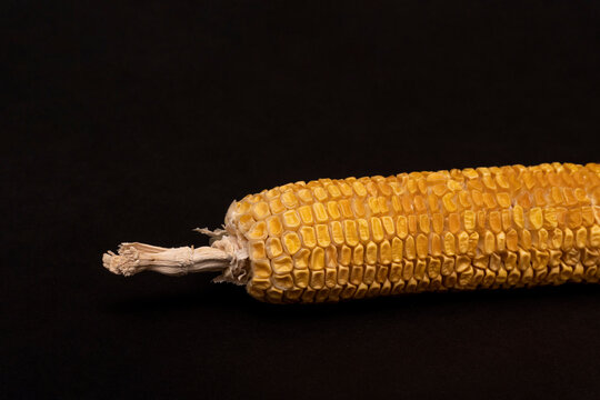 Moldy dried yellow corn at black bacground, spoiled product, not eatable, copy space.