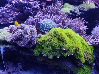 coral reef and coral