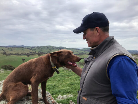 Australian sheep and wool producer Dave Young and his working dog are seen on his property in Bookham