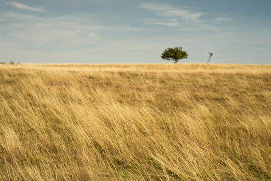 Beautiful grassland landscape with small trees, Deliblatska pescara, Zagajicka brda,  Serbia