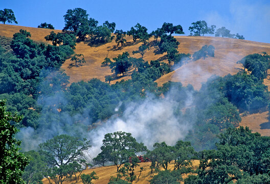 Early smoke from wildland fire rises above oak trees,  northern California