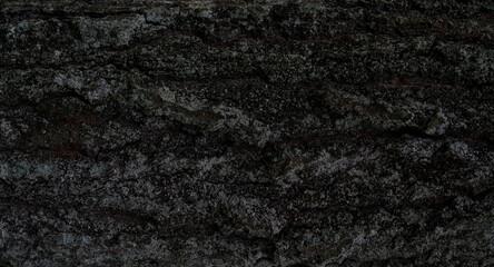 Fototapeta naturalna kora drzewa obraz