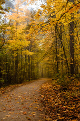 Winding forest pathway covered with bright yellow and orange fallen leaves on a moody autumn morning