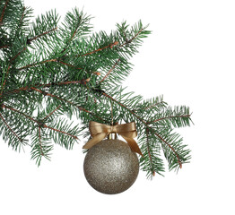 Golden shiny Christmas ball on fir tree branch against white background