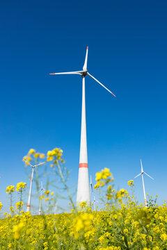 Windpark vor einem Rapsfeld