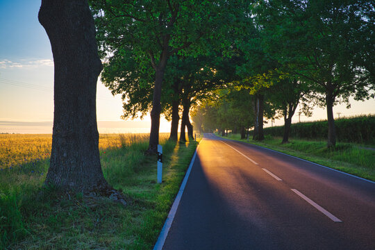 Morning sun on the country road