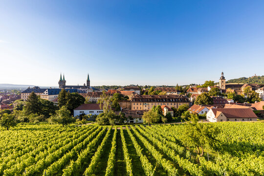 Germany, Bavaria, Bamberg, Green springtime vineyard with old town in background