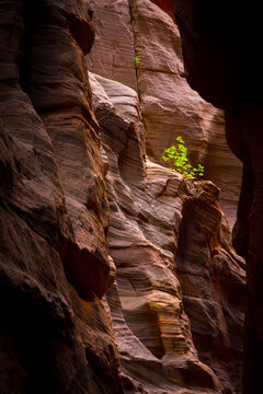 View of small tree in slot canyon
