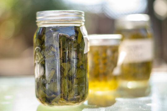 mason jars with homeade herbal infusions