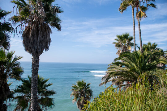 Palm tree framed view of surf and surfers, Swami's beach, San Diego C