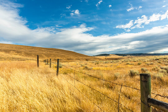 blue sky with white fluffy clouds stretched over the field on the hills with yellow grass.