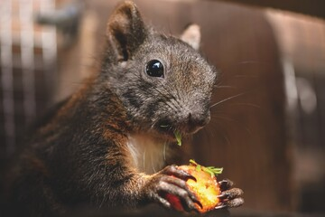 squirrel rodent animal