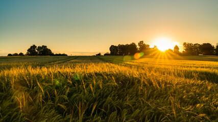 Germany, Stuttgart, Magical orange sunset sky above ripe grain field nature landscape in summer