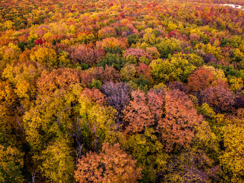 Aerial top view of a colorful deciduous forest with red, yellow, orange and green leaves during autumn evening, samara, russia