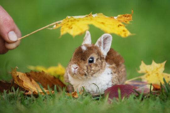 Little rabbit sitting under a leaf in autumn