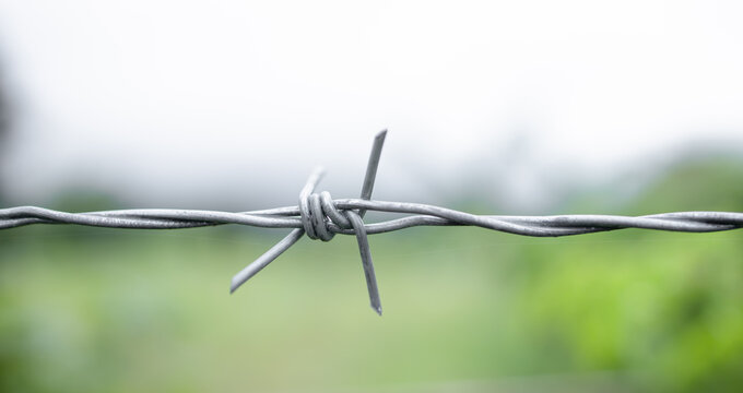 Steel barbed wires on nature backdrop. Human rights and social justice abstract concept with blurry barbed wire fence. Holocaust remembrance day for victims of torture.