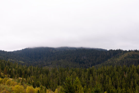 Mountains and coniferous forest in the fog. Carpathians. Ukraine.
