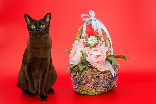 American Burmese cat and basket and flowers