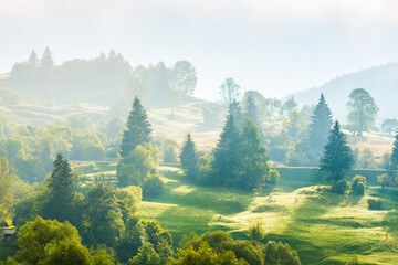 Nature landscape of pasture country hills with fog mist on green trees