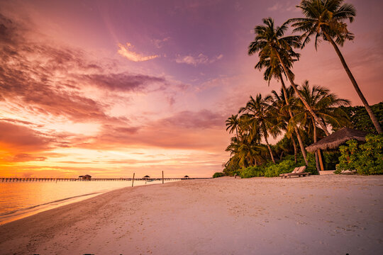 Beautiful beach. Palm trees on  sandy beach near the sea. Summer holiday and vacation, travel tourism. Inspirational tropical landscape. Tranquil scenery, relaxing beach, tropical landscape design