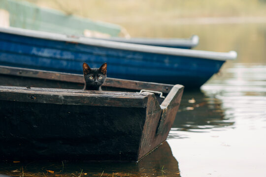 black cat in a wooden boat. Pet in nature, autumn mood