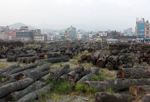 Tree trunks that where cut down for a road expansion project are piled along the road in Bhaktapur