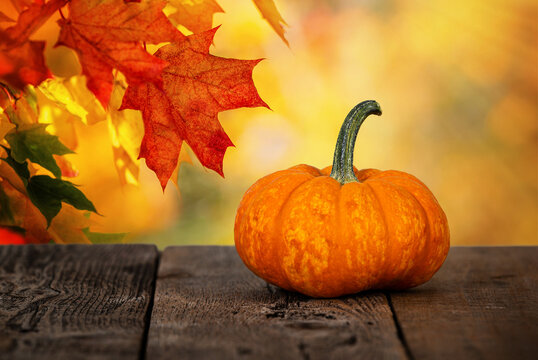 Mini pumpkin on rustic wooden table. Beautiful autumn maple tree leaves background with golden bokeh.
