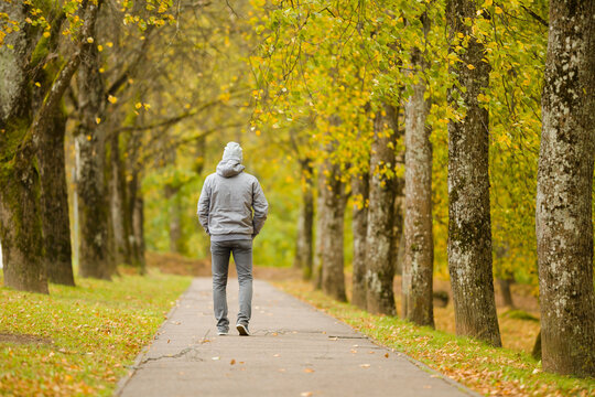One adult young man in gray warm clothes slowly walking through alley of trees in yellow autumn day at park. Spending time alone in nature. Peaceful atmosphere. Back view.
