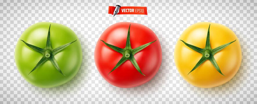 Tomates vectorielles sur fond transparent