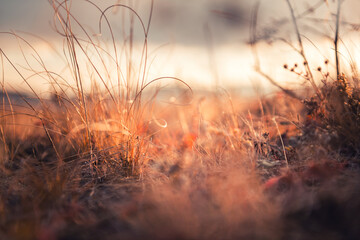 Dry autumn grasses in a forest at sunset. Macro image, shallow depth of field. Beautiful autumn nature background