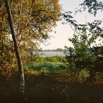 Morgennebel, Herbst