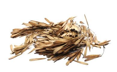 Fototapeta European ash seeds (Fraxinus excelsior) pile isolated on white background