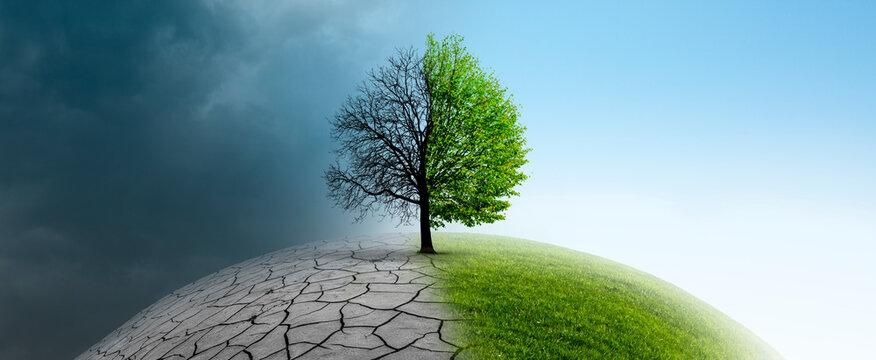 Baum auf einer Weltkugel im Klimawandel