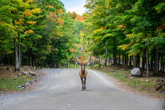 Encounter with a buck