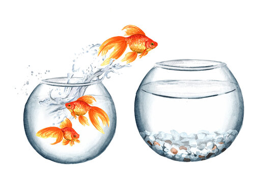 Goldfish. Gold fish jumping out of the small round glass aquarium in the big one. The concept of improvement of living conditions. Watercolor hand drawn illustration isolated on white background