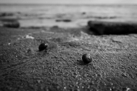 A shell at the beach of Wilhelmshaven