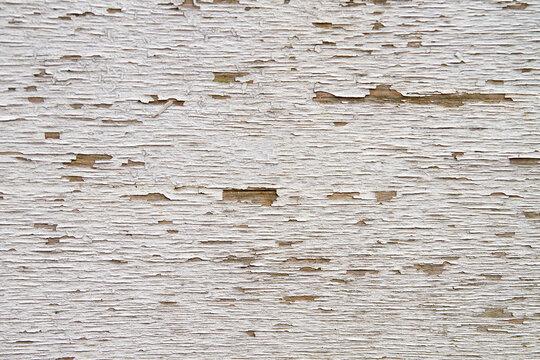 White wood txture