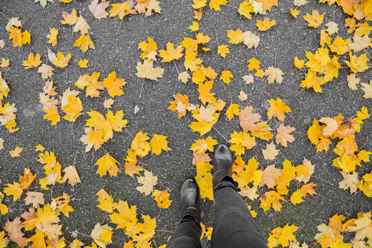 Young woman legs in black leather boots walking in autumn day. Asphalt covered with fallen yellow, fresh and lush maple leaves. Point of view shot. Top down view.