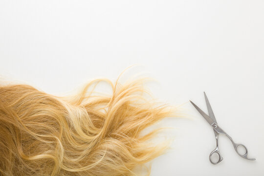 Blonde female hair and scissors on light gray background. Cutting hair concept. Closeup. Top down view.
