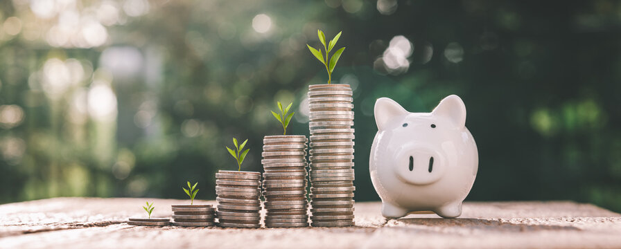 business finance and saving money investment , Money coin stack growing graph with piggy bank saving concept. plant growing up on coin. Balance savings and investment.