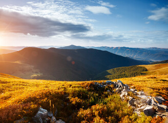 Wall Mural - Tranquil sunny day in alpine valley. Location place of Carpathian mountains, Ukraine.