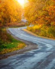 Wall Mural - Beautiful view of the autumn road through the forest with sunlight.
