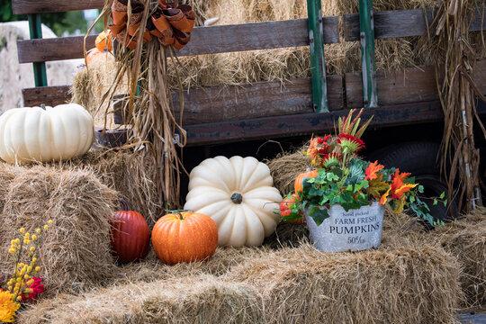 pumpkins and gourds - harvest season - fall - thanksgiving