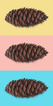 Spruce cone, fir cone. Dry coniferous cone. Isolated realistic 3d object presented on yellow, red and blue background. Seasonal traditional holiday design element