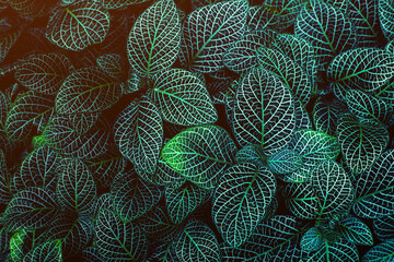 Wall Mural - closeup nature view of green leaf texture, dark wallpaper concept, nature background