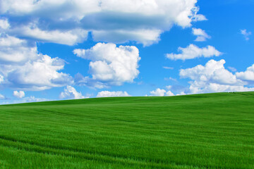 Lush, green landscape with blue sky and clouds. Spring Environment scene