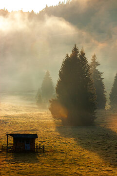 trees in the valley of mountainous natural park. foggy morning in autumn season. beautiful rolling landscape beneath a glowing sky