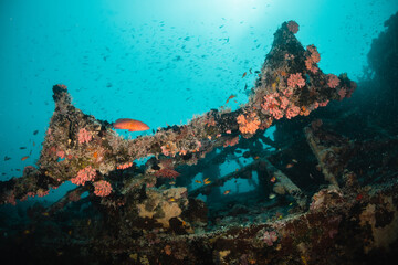 Underwater ship wreck surrounded by small tropical fish in blue ocean